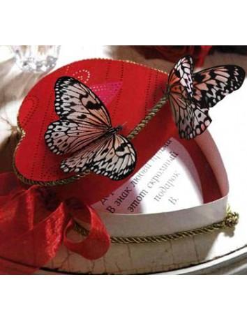 Бабочки и любовь