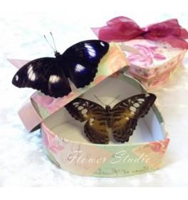 Бабочки Ты и Я