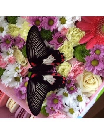 Набор Бабочка, цветы и макаруны