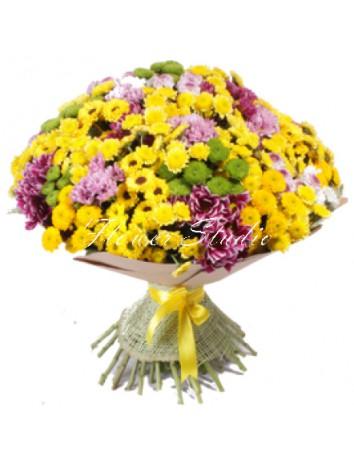 Букет Моя красавица из 51 кустовой хризантемы