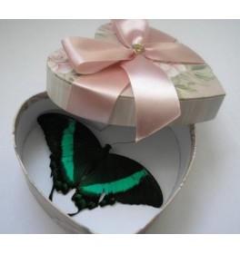Бабочка Единственная