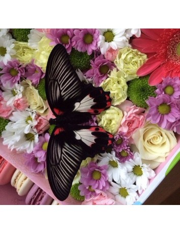 Бабочка, цветы и макаруны