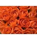 Букет Восточная красавица из 51 оранжевой розы