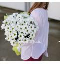 Букет Белая мечта из ромашковых хризантем