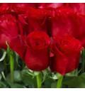 Букет 101 голландская роза красный