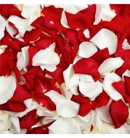 Бело-красные лепестки роз