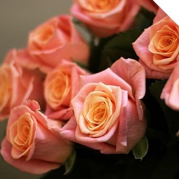 Купить цветы с доставкой в Краснодаре